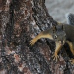 Squirrel Tahoe Nature Photography Canon Freeplay Women's Magazine